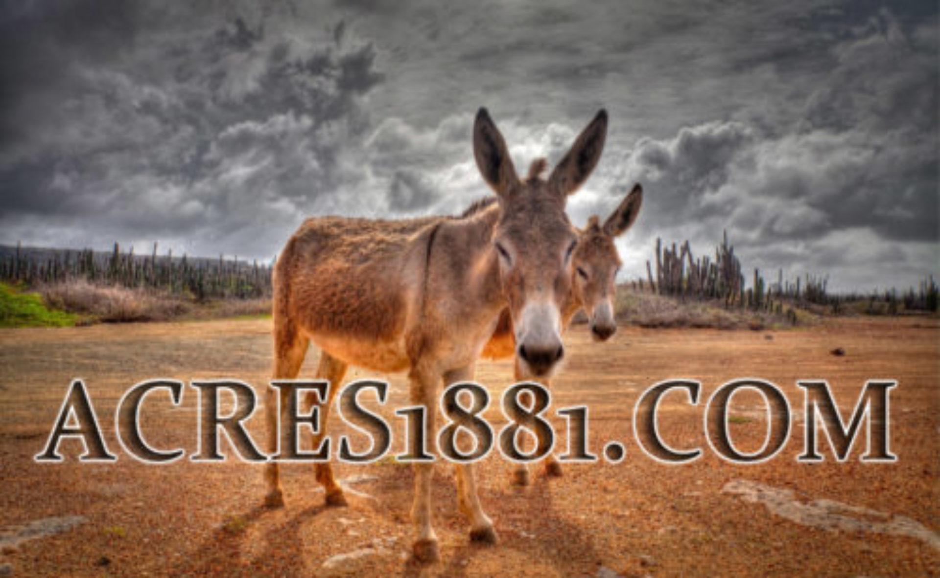 Acres1881.com